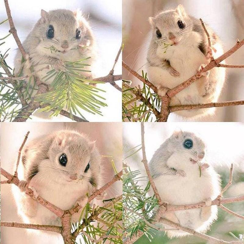 Owl - NSE