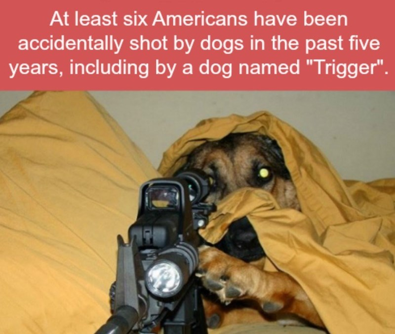 """Photography - At least six Americans have been accidentally shot by dogs in the past five years, including by a dog named """"Trigger"""""""