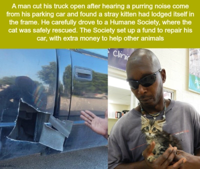 Adaptation - A man cut his truck open after hearing a purring noise come from his parking car and found a stray kitten had lodged itself in the frame. He carefully drove to a Humane Society, where the cat was safely rescued. The Society set up a fund to repair his car, with extra money to help other animals Clinic