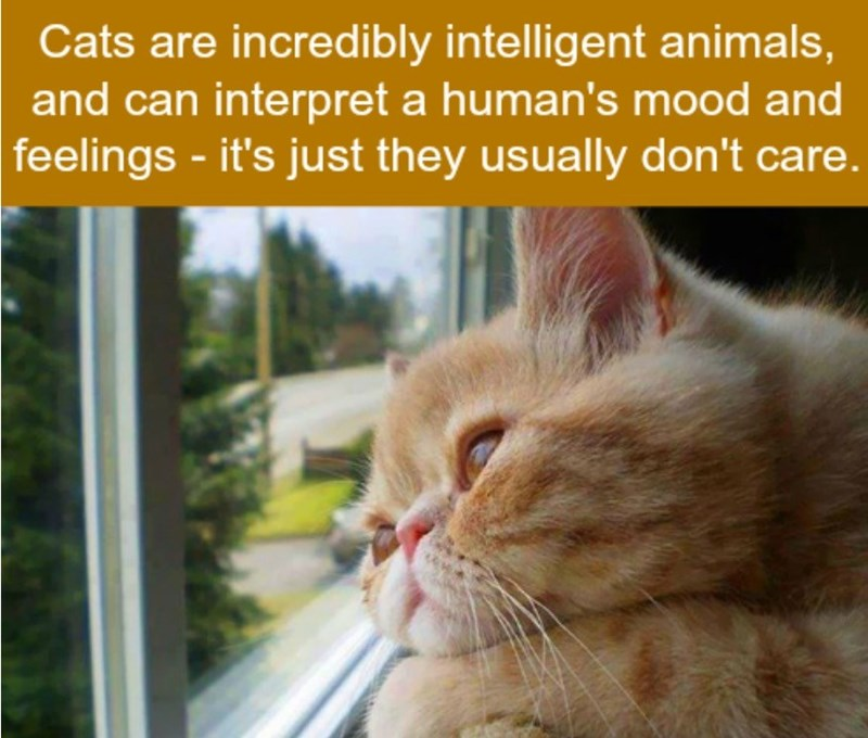 Cat - Cats are incredibly intelligent animals, and can interpret a human's mood and feelings-it's just they usually don't care.