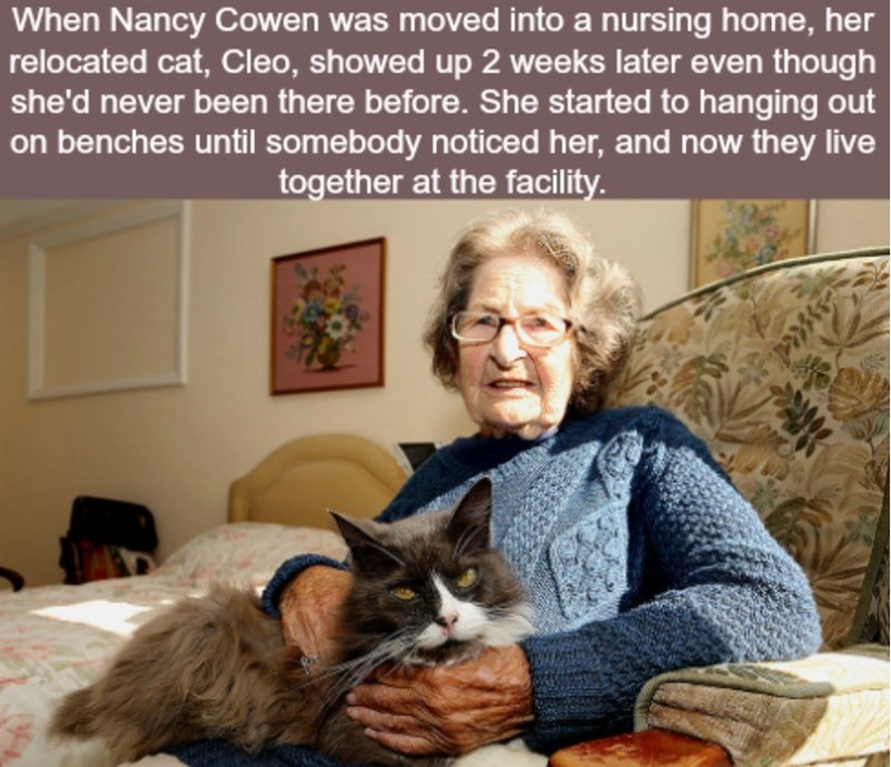 Cat - When Nancy Cowen was moved into a nursing home, her relocated cat, Cleo, showed up 2 weeks later even though she'd never been there before. She started to hanging out on benches until somebody noticed her, and now they live together at the facility.