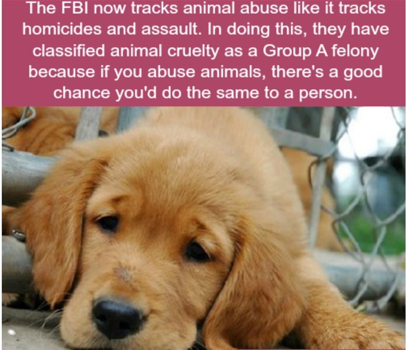 Dog - The FBI now tracks animal abuse like it tracks homicides and assault. In doing th is, they have classified animal cruelty as a Group A felony because if you abuse animals, there's a good chance you'd do the same to a person.