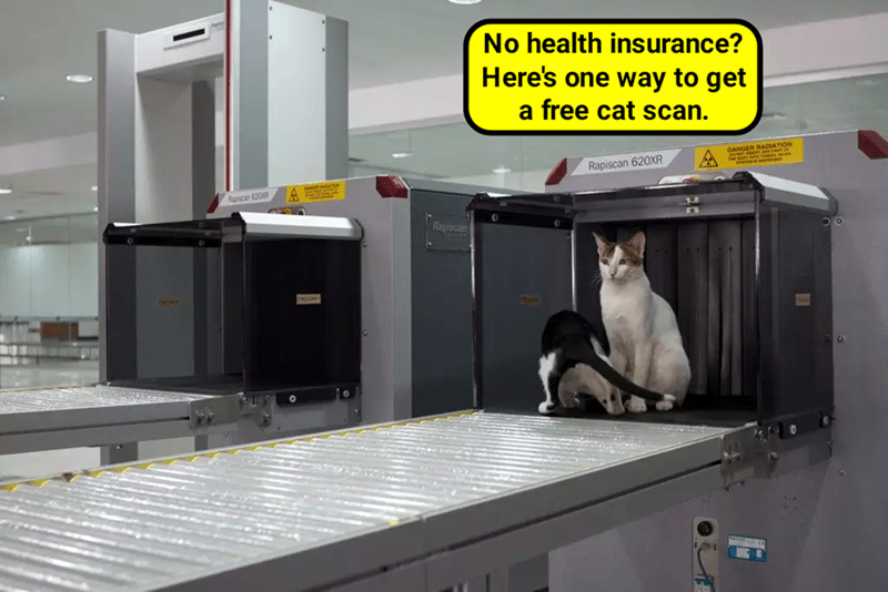 caption Cats free health insurance scan - 9022276096