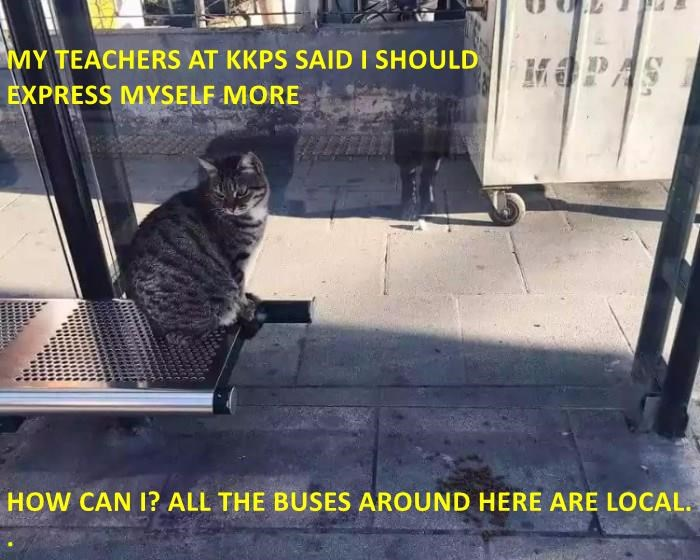 cat buses local express teacher caption - 9022300416