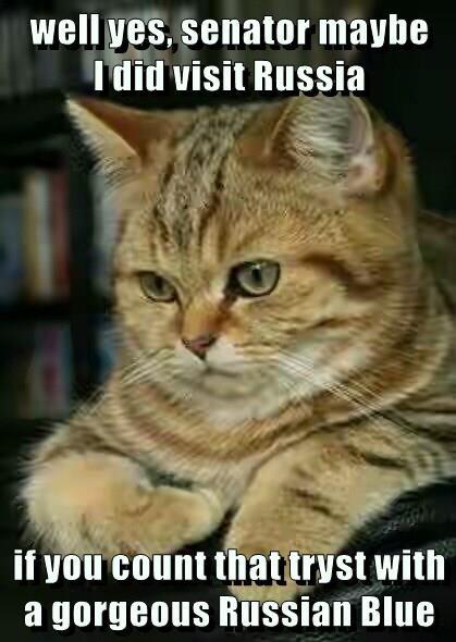 blue russia cat gorgeous senator visit tryst caption