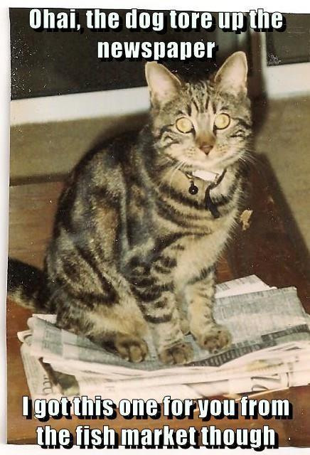 cat market caption fish newspaper - 9022382080