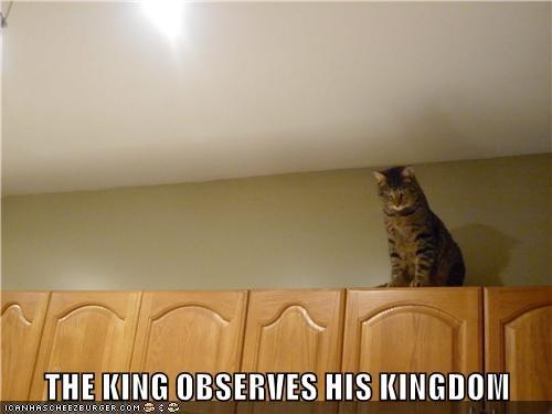 kingdom cat observes caption - 9022423040
