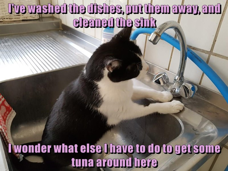 I've washed the dishes, put them away, and cleaned the sink I wonder what else I have to do to get some tuna around here