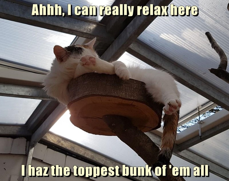 toppiest cat bunk caption relax - 9022478336