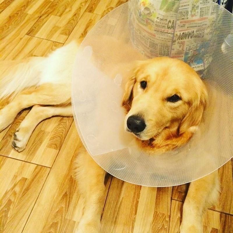 Dog - GRNUT