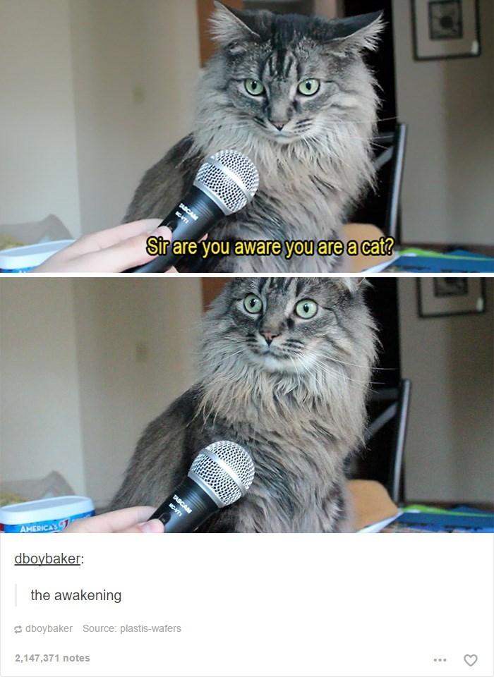 awareness Memes Cats - 9022689536