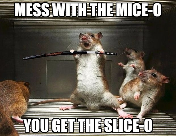 Rat - MESSWITH THE MICE O YOU GET THE SLICE O