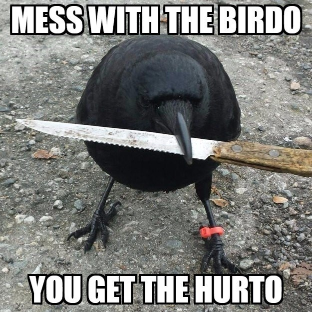Photo caption - MESS WITH THEBIRDO YOU GET THE HURTO