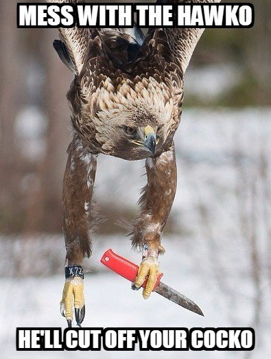 Bird - MESS WITH THE HAWKO HE'LL CUT OFF YOUR COCKO
