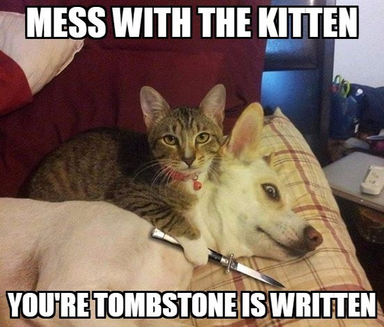 Cat - MESS WITH THE KITTEN YOURE TOMBSTONE IS WRITTEN