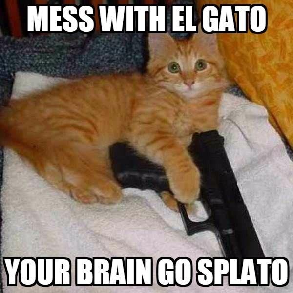 Cat - MESS WITH ELGATO YOUR BRAIN GOSPLATO