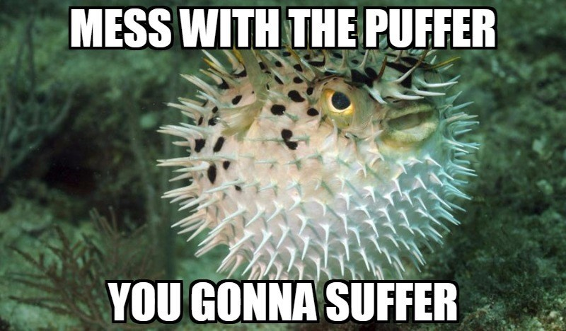 Porcupine fishes - MESS WITH THE PUFFER YOU GONNA SUFFER