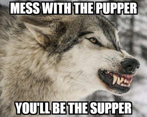Mammal - MESS WITH THE PUPPER YOULL BE THE SUPPER