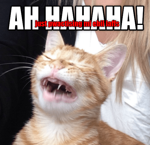 cat laughs evil practicing caption - 9022889216