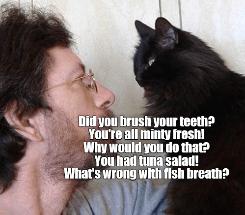 brush,cat,fresh,tuna,minty,teeth,caption,salad