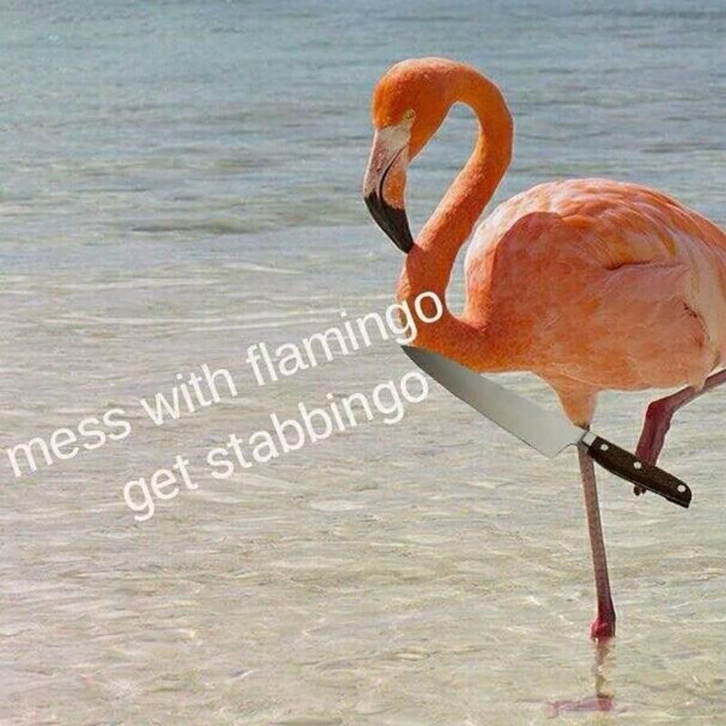 meme funny animals - 9023223552
