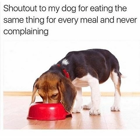 dogs funny animals - 9023224064