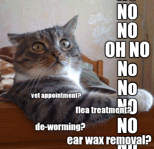 oh no appointment vet caption flea - 9023246848