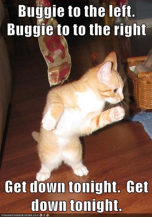 cat get down tonight budgie caption - 9023255296