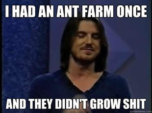 Photo caption - I HAD AN ANT FARM ONCE AND THEY DIDNT GROW SHIT quikmeme.co