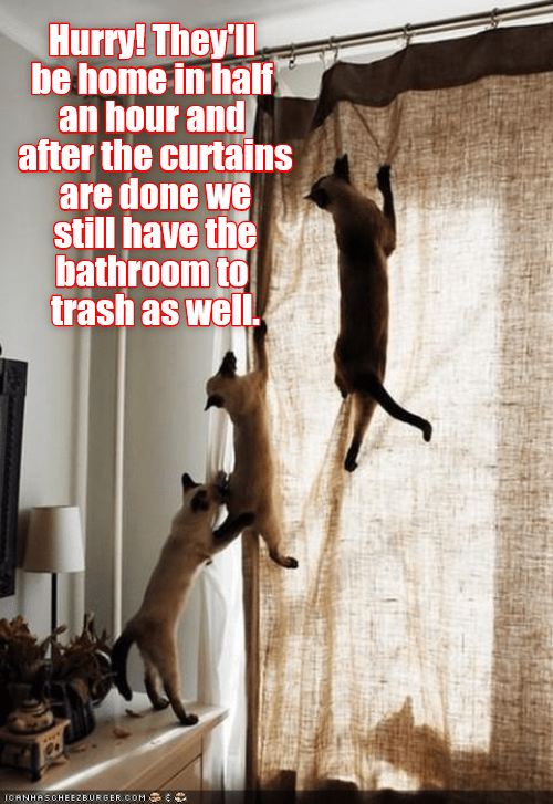trash curtains bathroom caption hurry Cats - 9023605760