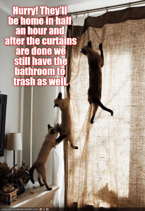 trash curtains bathroom caption hurry Cats - 9023605760