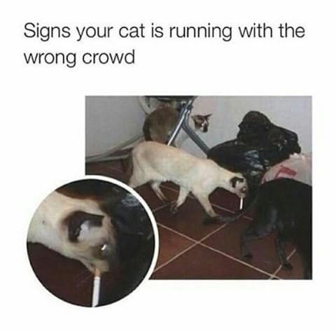 Memes Cats funny - 9023694848
