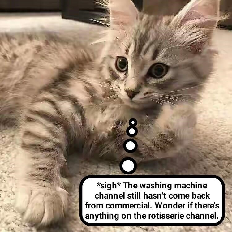 Cat meme about the microwave channel