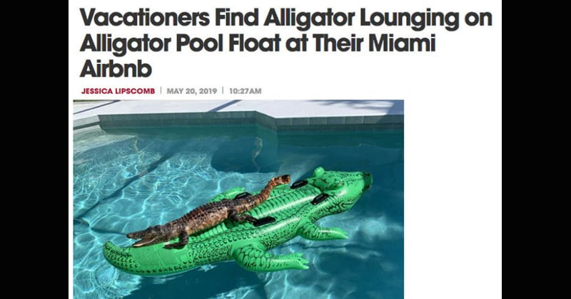 Funny 'Florida Man' headlines