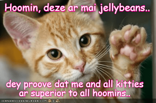 jellybeans kitten humans caption superior