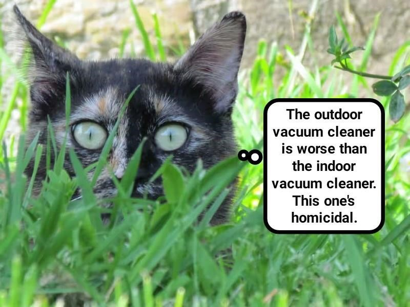 outdoors cat vacuum cleaner homicidal indoor caption - 9023803648