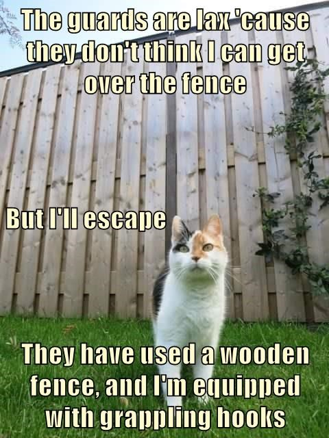 cat guards grappling hooks escape fence caption