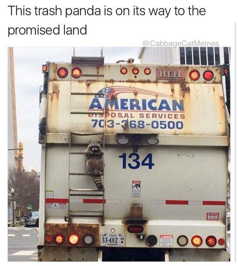 Memes raccoons animals - 9023839232