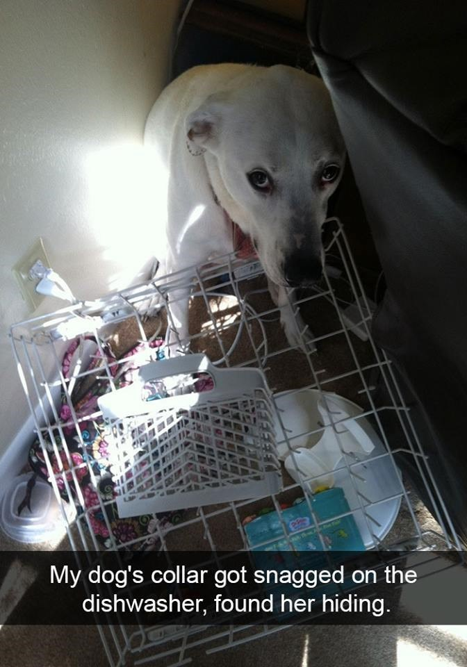 snapchat - Dog - My dog's collar got snagged on the dishwasher, found her hiding.