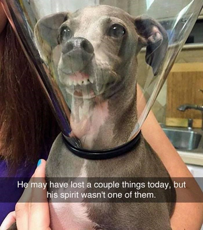 snapchat - Dog breed - He may have lost a couple things today, but his spirit wasn't one of them.