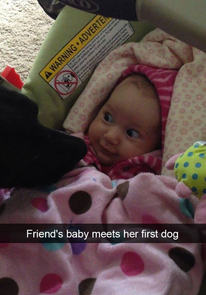 snapchat - Child - DO NOT place Rracing child sest on front eeat witha CEATH OR SERIOUS anoccur The back aatest place for chidres 12 and undur A WARNING ADVERTE M are ac Friend's baby meets her first dog