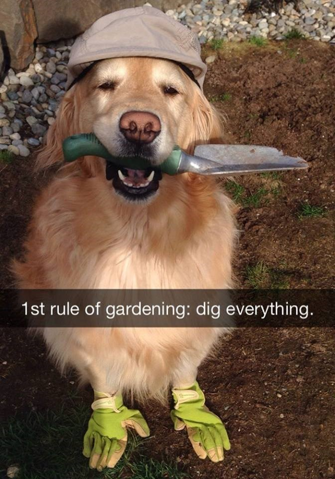 snapchat - Dog - 1st rule of gardening: dig everything.