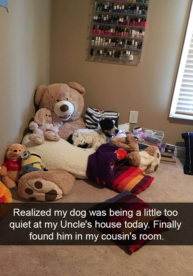 snapchat - Teddy bear - Poo Realized my dog was being a little too quiet at my Uncle's house today. Finally found him in my cousin's room.