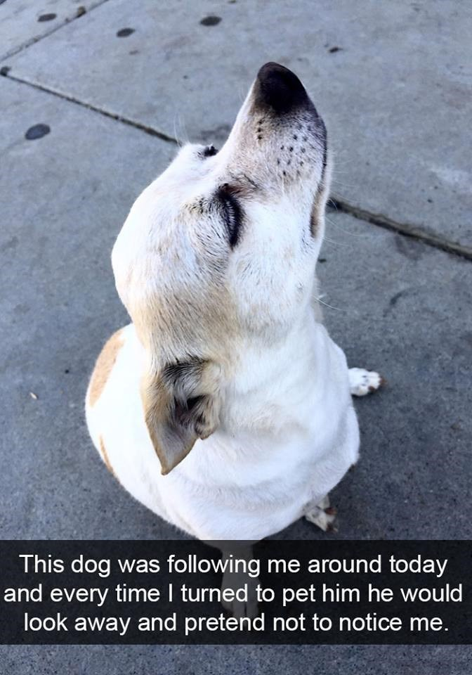 snapchat - Canidae - This dog was following me around today and every time I turned to pet him he would look away and pretend not to notice