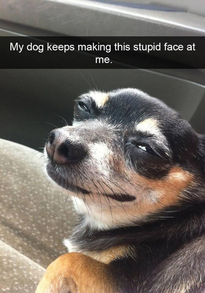 snapchat - Mammal - My dog keeps making this stupid face at me.