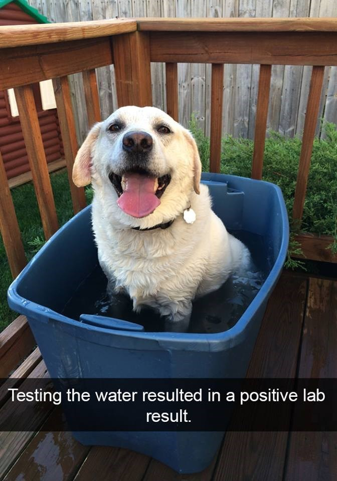 snapchat - Mammal - Testing the water resulted in a positive lab result.
