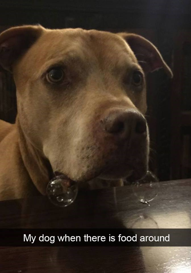 snapchat - Dog - My dog when there is food around