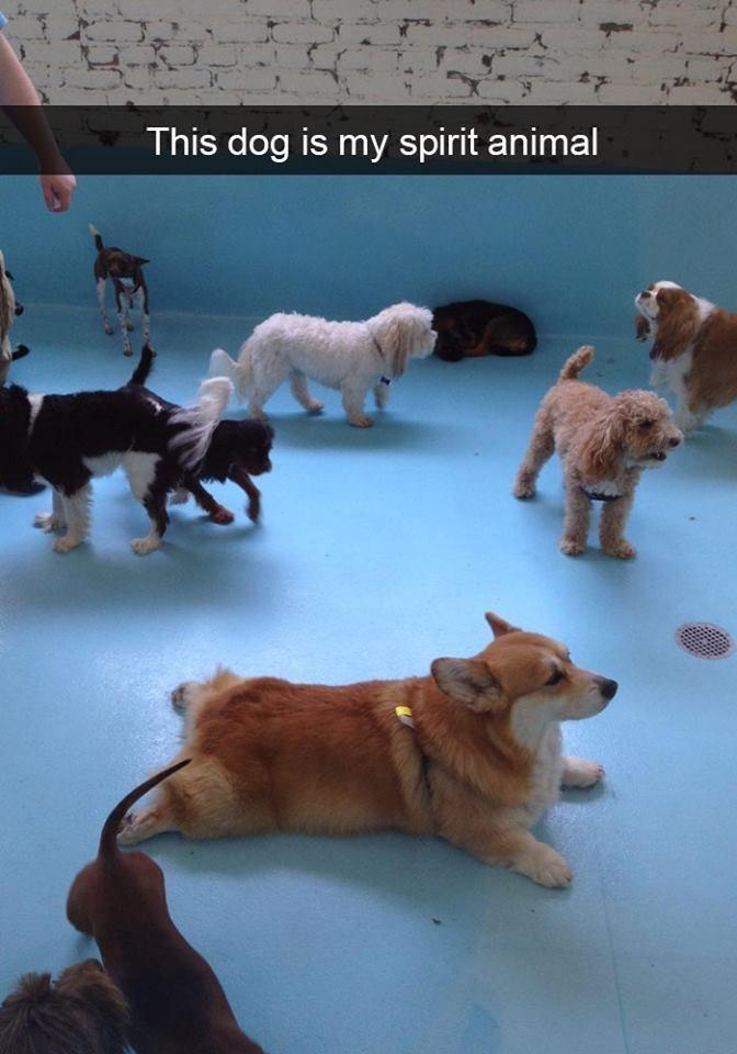 snapchat - Dog - This dog is my spirit animal