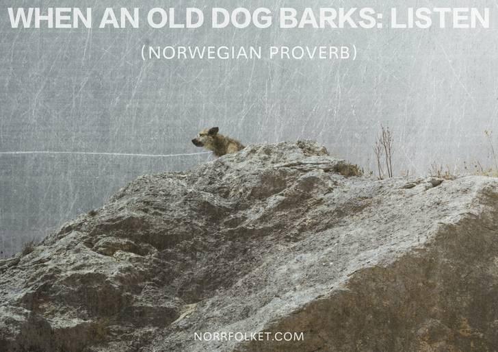 Text - WHEN AN OLD DOG BARKS: LISTEN (NORWEGIAN PROVERB) NORRFOLKET.COM