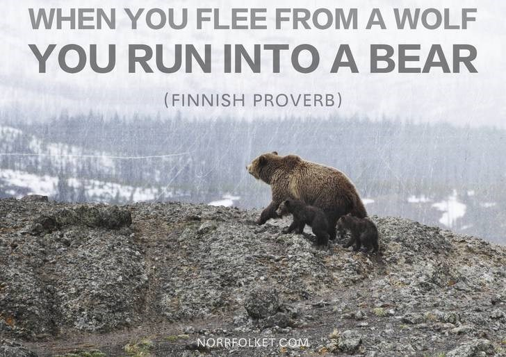 Wildlife - WHEN YOU FLEE FROMA WOLF YOU RUN INTO A BEAR (FINNISH PROVERB) ww. NORRFOLKET.COM